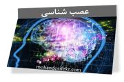 مغز ما چگونه یاد میگیرد؟ مسیرهای عصبی چیستند؟